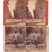 Pair 1880s Stereoviews of Los Angeles CA