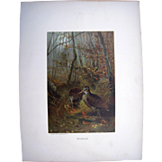 1885 Color Lithograph Plate of Woodcocks by Prang