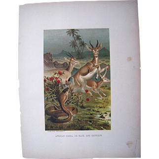 1885 Color Lithograph Plate of Gazelles and a Cobra by Prang