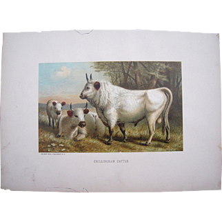 1885 Color Lithograph Plate of Cows by Prang