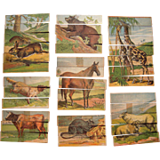Set of 8 Victorian Era Animal Strip Puzzles (Two Sided) Lot #5