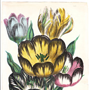 Mid 1800s Hand Colored Floral (Tulips) Lithograph