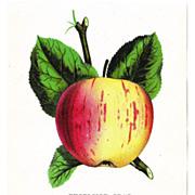 Lot of 6 1880s Color Lithograph Floral Plates #1