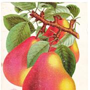 Lot of 5 1880s Color Lithograph Floral Plates #8