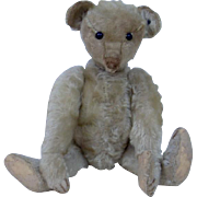 Charming Early 1900's Steiff Long Nose Teddy Bear with Blank Button In One Ear