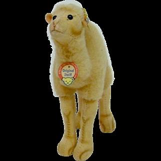 1950's Steiff Camel with Full ID MINT