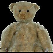 1909 Early Shoe-button Eye 12 inch Steiff Teddy Bear AS IS needs love