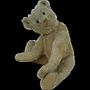 1910-12 Early Shoe button Eye White Steiff Teddy Bear 11.5 inches