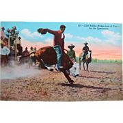 Vintage Cowboy Western Rodeo Calf Riding Postcard
