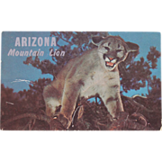 Arizona Mountain Lion Vintage Original Postcard Western Ways Color Tommy Lark