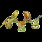 Five Royal Worcester Porcelain Birds