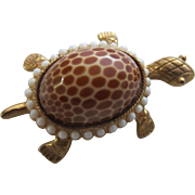 J.J. Turtle Brooch with Spotted Seashell Back