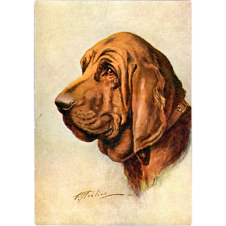 The Bloodhound Dog Embossed Postcard, Artist Signed.