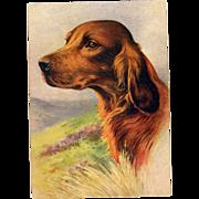 The Irish Setter Red Setter Embossed Postcard