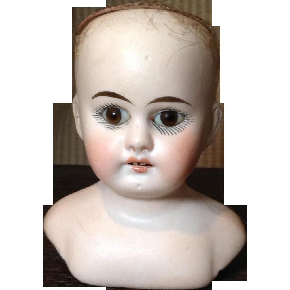 Petite German Shoulder Head with Beautiful Eyes