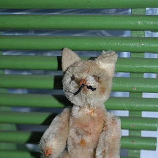 Schucco tiny cat