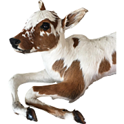 1940'S  White/Brown Calf in Laying Position