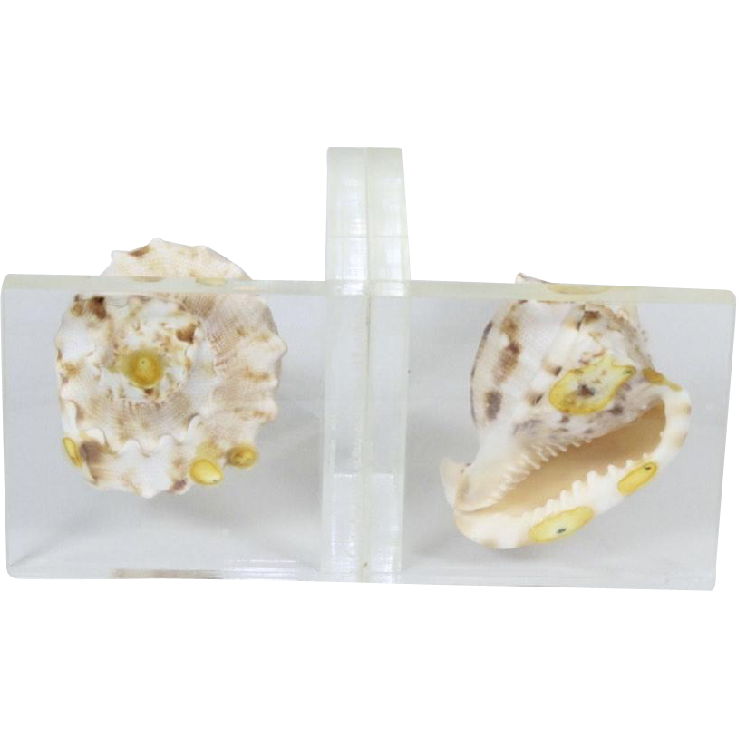 Vintage Lucite With Conch Shell Plex Art Designs Bookends Ocean Beach Decor