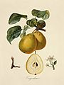 London Pear Tree Antiques