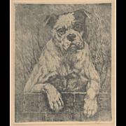 American Bulldog Etching c.1920