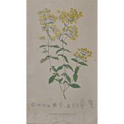 19th Century Hand Colored Botanical Lithograph