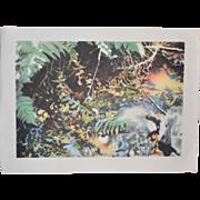 "David T. Kessler ""Reflected Overhang"" Lithograph"