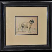 Bullmastiff Watercolor by R.F. Weir c.1895