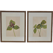 Botanical Prints - Pair - 19th Century