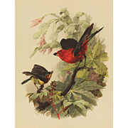 1880's Handcolored Bird Chromolithograph Print