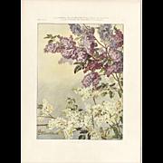 Lilac 1905 Botanical Lithograph