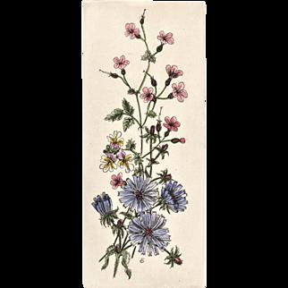 Original French Botanical Lithograph Print
