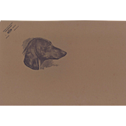 Dog print-Dachshund- AKC breed standard