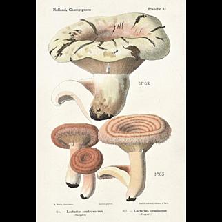 1910 Mushroom Chromolithograph Print