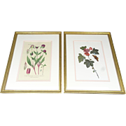 Pair of Framed Floral Pictures Circa 1980's