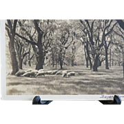 Bayard Wootten Grazing Sheep Signed Silver Gelatin Photograph