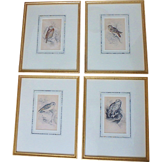 Four 19th C. Hand Colored Owl Book Plates from Birds of Great Britain by William Jardine