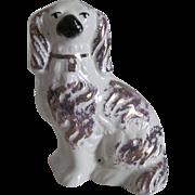 Staffordshire Spaniel Dog - Gold Lustre