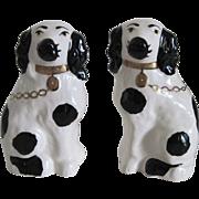 Matching Pr. Staffordshire Spaniel Dogs - Black & White