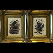 Pair Ornate Frames Offset Lithograph Joseph Smit 1900's Bird Prints