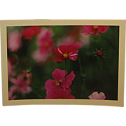 Vintage 1964 DANIEL FARBER 'Cosmos & Bud' Flower Photo - Listed Gravestone Photographer