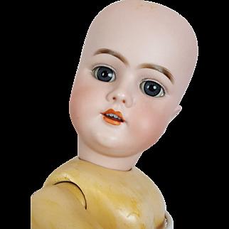 Handwerck German Bisque Doll 99 on Jointed Comp/Wood Body 21 in Blue Sleep Eyes