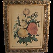 Roses Lithograph Print Horace Thayer Pub. Hand Colored C.1860 Antique