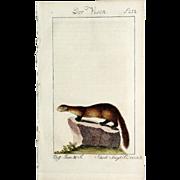 """1789 Comte de BUFFON'S Histoire Naturelle,  4 1/2 X 7 1/4 IN. Plate """"Der Vison #252"""", Hand Colored"""