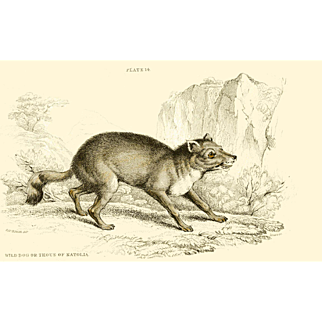 1838 Jardine Original Hand Colored Dog Engraving Wild Dog of Natolia  Plate #14