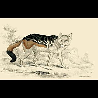 1838 Jardine Original Hand Colored Dog Engraving Cape Dog.