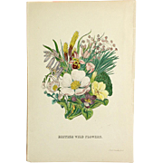 1863 Botanical Cover Page from British Wild Flowers Illustrated by John E. Sowerby. - Red Tag Sale Item