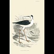 1833 Jardine Original Hand Colored Engraving Black-Winged Stilt Plate #18.