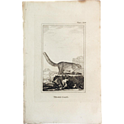 1812 Comte de BUFFON'S Histoire Naturelle,   4 1/2 X 7 1/4 IN. Plate BROWN COATI #160,   Without Text Pages.