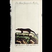 "1789 Comte de BUFFON'S Histoire Naturelle,   4 1/2 X 7 1/4 IN. Plate ""Der Kleine Guianische Marder #243 (Small Martin)"", Hand Colored"