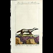 """1789 Comte de BUFFON'S Histoire Naturelle, 1789,  4 1/2 X 7 1/4 IN. Plate """"Der Guianische Marder #243B ( Martin)"""", Hand Colored"""